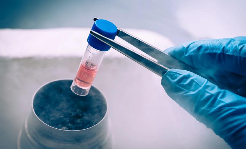 Despre celulele stem. Cu fascinație!